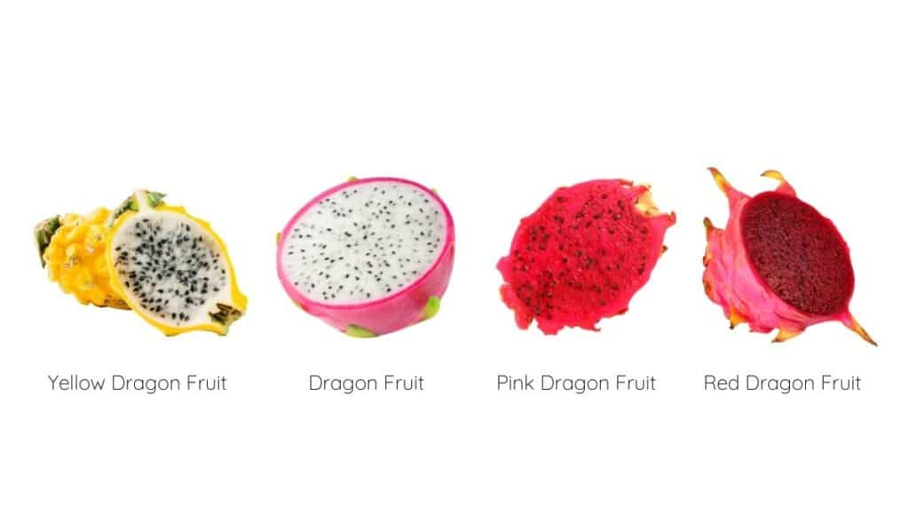 Different types and colors of dragon fruit